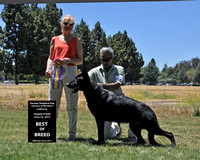 German Shepherd Dog Fanciers of Northern California Specialty - Pam O'Dell